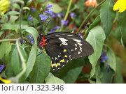 Бабочка в цветах. Стоковое фото, фотограф Владимир Гарникян / Фотобанк Лори