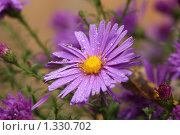 Цветок фиолетовый. Стоковое фото, фотограф Тучкина Любовь Владимировна / Фотобанк Лори
