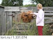 Купить «Молодая женщина гладит корову», фото № 1331074, снято 7 августа 2009 г. (c) Софья Петрова / Фотобанк Лори