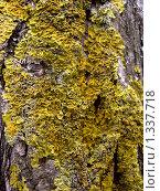 Ствол дерева, покрытый мхом. Стоковое фото, фотограф Оксана Кулиненко / Фотобанк Лори