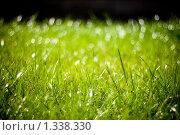 Зеленая трава с бликами на черном фоне. Стоковое фото, фотограф Алексей Хляпов / Фотобанк Лори
