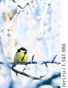 Купить «Синица на фоне заснеженных деревьев», фото № 1341986, снято 3 января 2010 г. (c) Евгений Захаров / Фотобанк Лори