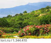 Купить «Синие горы, голубое море, розовые рододендроны. Крым.», фото № 1344410, снято 23 августа 2009 г. (c) ИВА Афонская / Фотобанк Лори