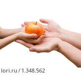 Яблоко в руках отца и сына. Стоковое фото, фотограф Сергей Матвеев / Фотобанк Лори