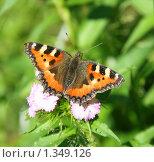 Купить «Бабочка на цветке летним солнечным днем», фото № 1349126, снято 30 июня 2009 г. (c) Щеголева Ольга / Фотобанк Лори