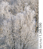 Зимний пейзаж. Стоковое фото, фотограф Вячеслав Маслов / Фотобанк Лори