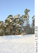 Купить «Парк Серебряный бор, зима», эксклюзивное фото № 1351830, снято 4 января 2010 г. (c) Наталия Шевченко / Фотобанк Лори