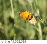 Купить «Бабочка на цветке», фото № 1352386, снято 21 июля 2009 г. (c) Илья Телегин / Фотобанк Лори