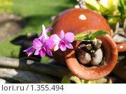 Купить «Орхидея», фото № 1355494, снято 6 января 2010 г. (c) Екатерина Овсянникова / Фотобанк Лори