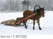 Купить «Запряженная в сани лошадь», эксклюзивное фото № 1357022, снято 2 января 2010 г. (c) Наталия Шевченко / Фотобанк Лори