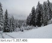 Заснеженный лес в горах (2009 год). Стоковое фото, фотограф Виктор Пивоваров / Фотобанк Лори