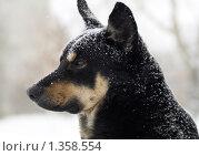 Купить «Собака», фото № 1358554, снято 6 января 2010 г. (c) Andrey M / Фотобанк Лори