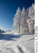 Купить «Зима в лесу», фото № 1359086, снято 5 января 2010 г. (c) Рустам Шигапов / Фотобанк Лори
