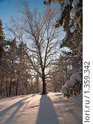 Береза в зимнем лесу. Стоковое фото, фотограф Кельс Андрей / Фотобанк Лори