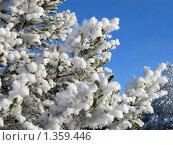Купить «Сосновые ветки в снегу», фото № 1359446, снято 8 января 2010 г. (c) Вересов Сергей Николаевич / Фотобанк Лори