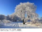 Солнечный зимний день, эксклюзивное фото № 1371486, снято 12 января 2010 г. (c) Яна Королёва / Фотобанк Лори