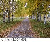 Осень.Березовая аллея. Стоковое фото, фотограф Вера Попова / Фотобанк Лори