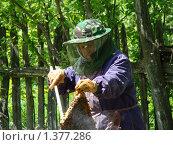 Пожилая женщина проверяет пчелиный улей. Стоковое фото, фотограф Нина Солнцева / Фотобанк Лори