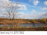 Дерево у воды. Стоковое фото, фотограф Татьяна Вишнякова / Фотобанк Лори