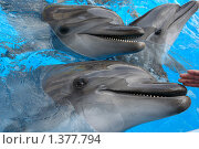 Дельфины. Стоковое фото, фотограф Николай Бескоровайный / Фотобанк Лори