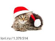 Купить «Котенок в красной шапочке», фото № 1379514, снято 15 января 2010 г. (c) Бутинова Елена / Фотобанк Лори