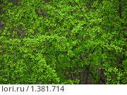 Купить «Кустарник весной», эксклюзивное фото № 1381714, снято 8 мая 2009 г. (c) Алёшина Оксана / Фотобанк Лори