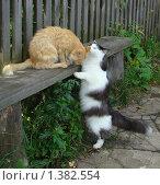 Кот и кошка на лавочке. Стоковое фото, фотограф Сметанова Наталия / Фотобанк Лори