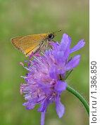 Купить «Мотылёк на цветке», фото № 1386850, снято 4 июля 2009 г. (c) Самойлова Екатерина / Фотобанк Лори