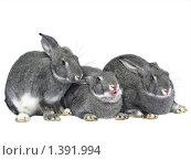 Зайцы сплетники. Стоковое фото, фотограф Диана Гарифуллина / Фотобанк Лори