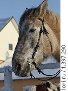 Купить «Морда лошади», фото № 1397290, снято 16 января 2010 г. (c) Яременко Екатерина / Фотобанк Лори