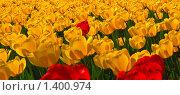 Купить «Красные и желтые тюльпаны», фото № 1400974, снято 9 мая 2009 г. (c) Алёшина Оксана / Фотобанк Лори