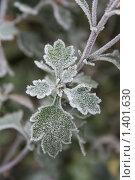 Купить «Первый мороз», фото № 1401630, снято 4 ноября 2008 г. (c) Александр Плахов / Фотобанк Лори