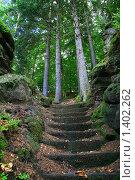 Тайны леса. Стоковое фото, фотограф Наталья Перекот / Фотобанк Лори