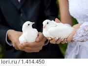 Купить «Два белых голубя в руках молодоженов», фото № 1414450, снято 30 августа 2008 г. (c) Владимир Сурков / Фотобанк Лори