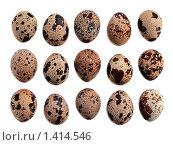 Купить «Много разных перепелиных пятнистых яиц на белом фоне. Изолировано.», фото № 1414546, снято 21 января 2010 г. (c) Алексей Рогожа / Фотобанк Лори