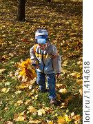 Мальчик собирает букет из кленовых листьев в парке. Стоковое фото, фотограф Матвеева Наталья / Фотобанк Лори