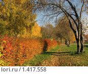 Купить «Осень в парке», фото № 1417558, снято 4 октября 2008 г. (c) Татьяна Злобина / Фотобанк Лори