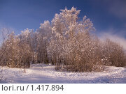 Купить «Зимний лес», фото № 1417894, снято 23 января 2010 г. (c) Алексей Петров / Фотобанк Лори