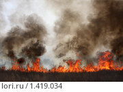 Лесной пал. Стоковое фото, фотограф Артём Скороделов / Фотобанк Лори
