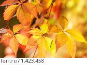 Осенние листья. Стоковое фото, фотограф Andrejs Pidjass / Фотобанк Лори