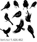 Набор птичек. Стоковая иллюстрация, иллюстратор Светлана Арешкина / Фотобанк Лори