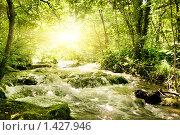 Купить «Река в джунглях», фото № 1427946, снято 19 июня 2008 г. (c) Andrejs Pidjass / Фотобанк Лори
