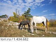 Купить «Лошадь и жеребенок пасутся, Горный Крым», фото № 1434682, снято 4 октября 2009 г. (c) Воу-воу-воу пам-па-рам / Фотобанк Лори
