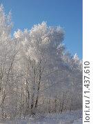 Деревьев в инее. Стоковое фото, фотограф nikolay uralev / Фотобанк Лори