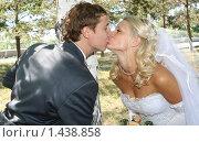 Молодожены целуются. Стоковое фото, фотограф Евгений Курлыкин / Фотобанк Лори