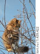 Купить «На дереве», фото № 1439422, снято 30 января 2010 г. (c) Ivan Bukarev / Фотобанк Лори