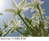 Белые цветы на фоне голубого неба. Стоковое фото, фотограф Yana Geruk / Фотобанк Лори