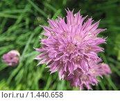 Розовый цветок. Стоковое фото, фотограф Юлия Кузнецова / Фотобанк Лори