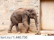 Купить «Прогуливающийся слон», фото № 1440730, снято 27 марта 2009 г. (c) Ирина Кожемякина / Фотобанк Лори