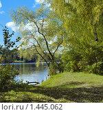 Купить «Ива на берегу реки», фото № 1445062, снято 6 августа 2020 г. (c) Михаил Марковский / Фотобанк Лори